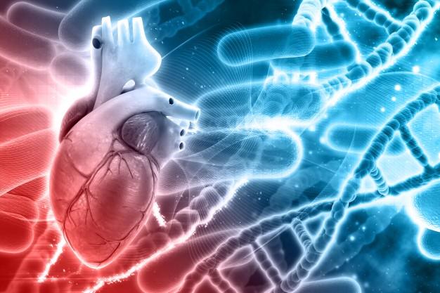Read more about the article Mengatasi Pembesaran Jantung yang Bisa Memicu Kematian Mendadak